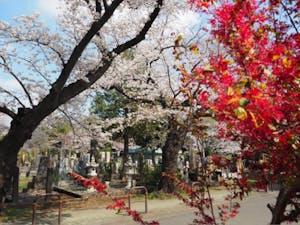 都立 谷中霊園の画像