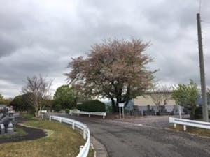 大分市営 丸山墓地公園の画像