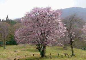 樹木葬の天徳寺の画像