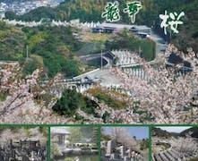 大野城 龍華霊園の画像