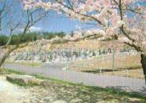 五色園墓地の画像