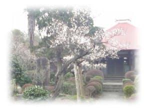 龍洞院の画像