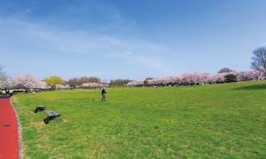 メモリアルみさと公園の画像