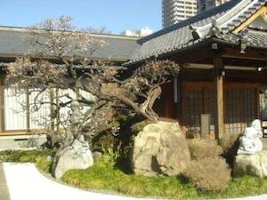瑠璃光山 観蔵院の画像