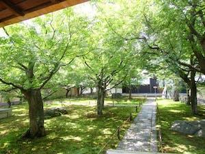 大本山大徳寺塔頭 黄梅院の画像