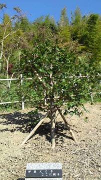 樹木葬・自然葬の高照寺