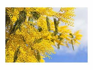 浜松メモリアルガーデンの画像