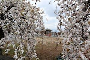 ふじみ桂葉霊園の画像
