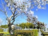 西福寺霊苑