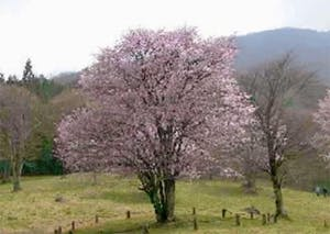樹木葬の天徳寺 樹木葬 個別区画の画像