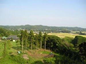 樹木葬の天徳寺 桜葬 共同区画の画像