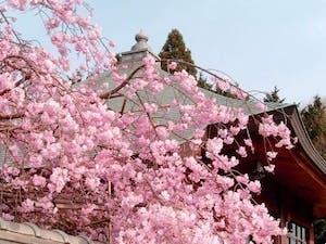 柳谷聖苑の画像