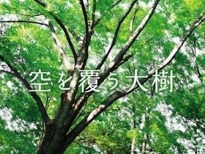 千年樹木葬の画像