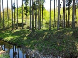 七ツ森樹木葬の画像