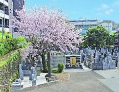 港区高輪 正源寺墓苑の画像