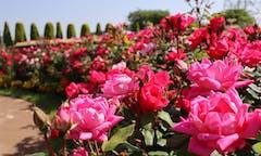サニープレイス松戸 樹木葬・永代供養殿の画像