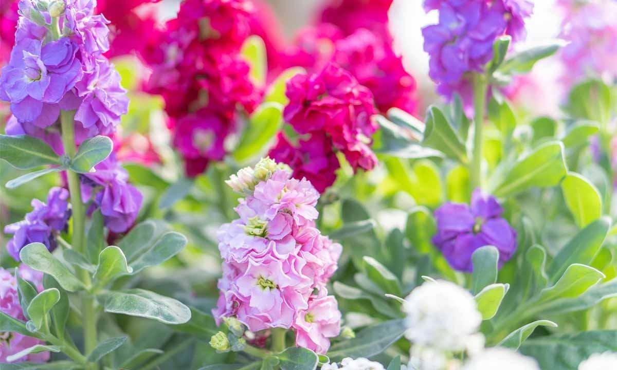 サニープレイス松戸 樹木葬・永代供養殿