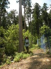 森のお墓「いのちの森」の画像