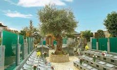 杉並堀ノ内樹木葬 オリーブ光の庭園の画像