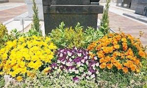 エバーグリーン金町の画像