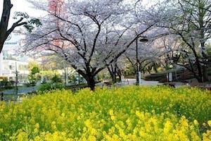 芝庭苑の画像