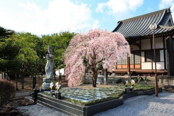 藤の庭園 日光市 樹木葬墓地