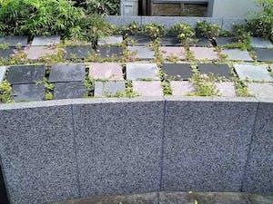 願正寺樹木葬 「浄樹苑」の画像