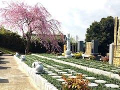 市原さくら樹木葬墓地の画像