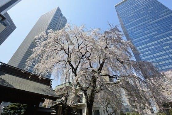 新宿 常圓寺