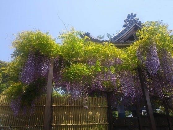鎌倉樹木葬墓地・安穏廟