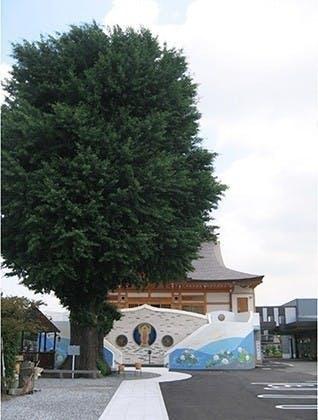 久喜樹木葬墓地