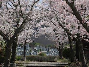道後聖墓苑北霊域の画像