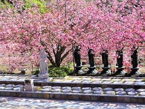 一心寺 樹木葬「夢さくら」の画像