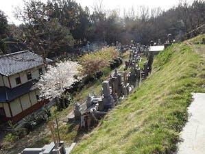 浄光寺「やすらぎ浄桜墓」 永代供養墓 樹木葬の画像
