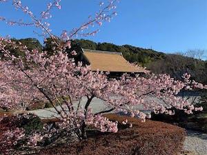 宝林寺 永代納骨供養墓の画像
