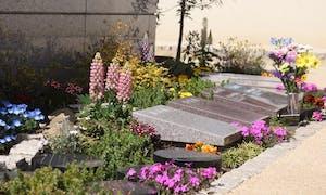 秩父 ペットと一緒の樹木葬「お花畑の霊園」慈眼寺の画像