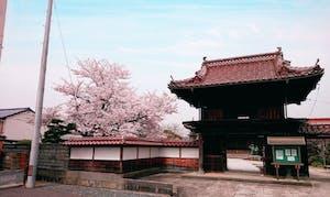善正寺の画像
