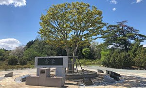 蔵王メモリアルパーク 楓の丘(合祀にならない樹木葬)の画像