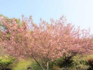 瑞雲寺(永代供養墓・納骨堂・一般墓)の画像