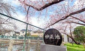 妙正寺 永代供養墓・樹木葬の画像