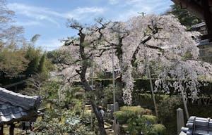 高原寺浄園の画像