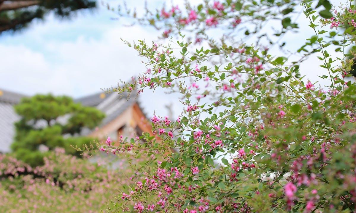 萩の寺・永代供養墓『吉祥林永代塔』