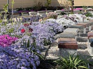 日輪寺樹木葬の画像