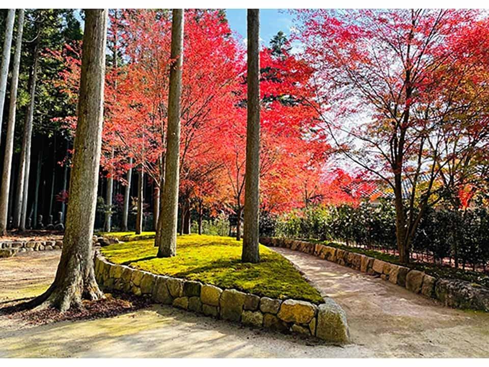 櫟野寺 樹木葬 櫟苑