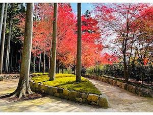 櫟野寺 樹木葬 櫟苑の画像