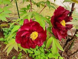 秋川渓谷 樹木葬墓 笑みの樹の画像